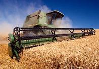 Житомирське зерно везуть до Швейцарії, Росії, Німеччини