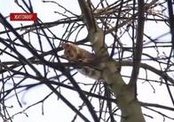 У Житомирі рятувальники зняли з дерева кошеня, яке просиділо там 4 дні, розриваючи містянам серце і голову. Відео
