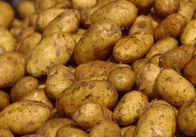 Молодой человек украл 334 кг картофеля из поля частного предприятия