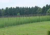 Аграрії області приступили до збору хмелю та цукрових буряків