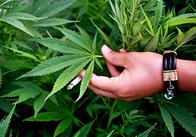 Борьба с нелегальным оборотом наркотиков в Житомирской области продолжается...