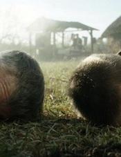 """У Житомирі покажуть номінант на Оскар, український фільм """"Поводир"""""""