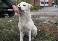 В Житомирській міській раді досі думають, як вирішити проблему бродячих собак