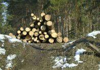 На Житомирщині безкарно вирубують ліси