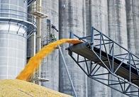 За три місяці 2015 року Житомирщина експортувала зерна майже вдвічі менше ніж попереднього року