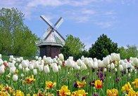 Необыкновенно красивая Голландия глазами украинцев