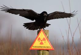 Чорнобильці Житомирщини через сесію райради спробують подолати розкрадання коштів
