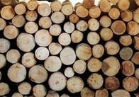 Наш ліс не підходить? Житомирські військові купуватимуть деревину для опалення у киян
