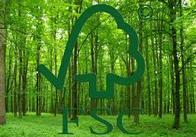 Половина лісгоспів Житомирщини пройшли сертифікацію