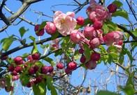 Через тиждень буде справжня весна