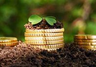 Середній розмір плати за оренду одного гектара землі на Житомирщині становить 937 гривень