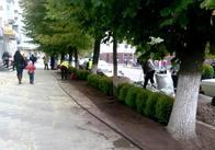 """В центрі Житомира будуть """"зелені"""" паркани. Фото"""