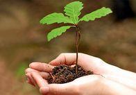 Поки інші вирубають, житомирські лісники збираються засадити ліси новими деревами