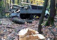 На Житомирщині поліція розслідує випадки незаконої вирубки дерев