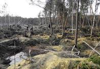 """Прокуратура через суд хоче повернути державі 14 гектарів """"бурштинової"""" землі на Житомирщині"""