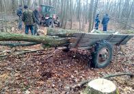 І знову крадений ліс: на Житомирщині поліція впіймала батька і синів. Фото