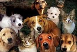 30 листопада – всесвітній день домашніх тварин