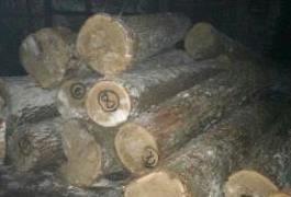 На Житомирщині поліцейські викрили незаконні оборудки з лісом