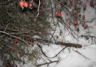 Житомирські прикордонники поблизу державного кордону виявили мисливську зброю