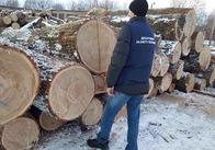 На Житомирщині впіймали чергового крадія лісу. Фото