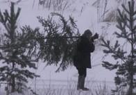 Рейдові групи виявили вже 5 випадків незаконної вирубки ялинок