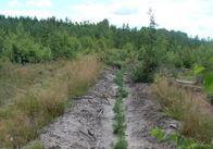 Лісівники Житомирщини цьогоріч планують заліснити майже 8 тисяч гектарів
