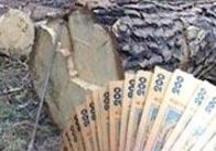 На Житомирщині зрубали 92 граба. Ведеться слідство
