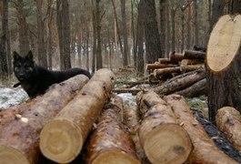 На Олевщині - кримінальна епопея з лісом