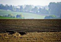 Конституційний суд перевірить законність заборони продажу земель