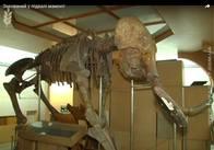 Захоронений у підвалі мамонт. Чому не добудували обіцяний музей природи у Житомирі