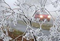В Україні оголошено штормове попередження. На Житомирщині - заморозки