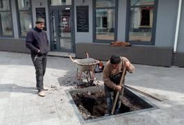 Михайлівську готують до посадки сакур. Фото
