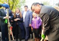 На Михайлівській почали саджати сакури. Фото
