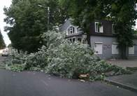 На Грушевського впало дерево