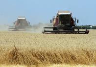 ТОП-5 областей України з найвищим показником урожайності від Мінагрополітики. Житомирщини серед лідерів немає
