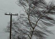 Негода знеструмила 4 області. На Житомирщині повалила дерева, пошкодила дахи