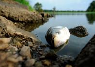 У першому півріччі вилов риби у Житомирській області впав найбільше по Україні - до 73%