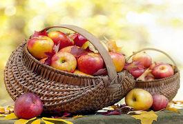 На яблучний спас у Житомирі відбудеться яблунева дискотека