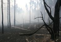 Пожежу на території заповідника у Житомирській області локалізували