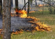 В Україні оголошена пожежна небезпека. Житомирщину минуло