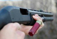 """""""Чорні лісоруби"""" з Рівненської області відкрили вогонь по житомирському лісовому патрулю"""