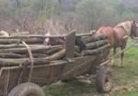 На Житомирщині чоловік незаконно рубав ліс - заплатив 12 тисяч штрафу