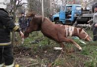 У Житомирі підйомником з колодязя витягували коня. Фото