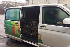 """Житомирський """"Центр захисту тварин"""" допомагає чіпувати безпритульних тварин в області. Фото"""