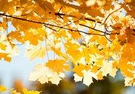 У Житомирі та області на вихідних буде тепло і без опадів