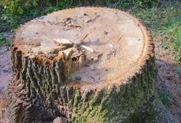З початку року у Житомирській області з крадіїв лісу стягнули лише 5% від заподіяної шкоди