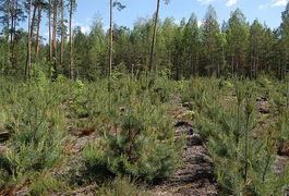 Лісники завершили рахувати кількість лісу у Житомирській області