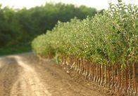 У Житомирській області можна вирощувати біомасу, яка замінить російський газ, - голова Держенергоефективності