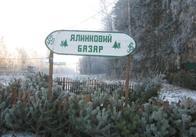 Завтра у Житомирській області запрацюють ялинкові базари