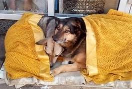 Собакам у Житомирі влаштували імпровізований пункт обігріву